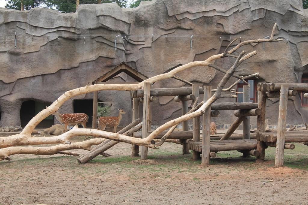 Ижевский зоопарк антилопы