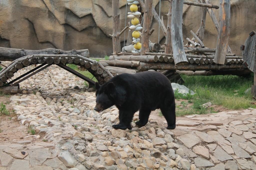 Вольер с медведем
