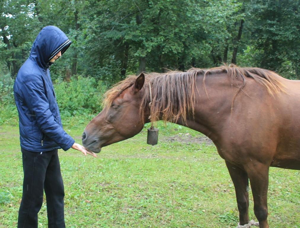 Угостил лошадку