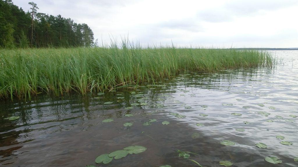 Берег озера Нюхти