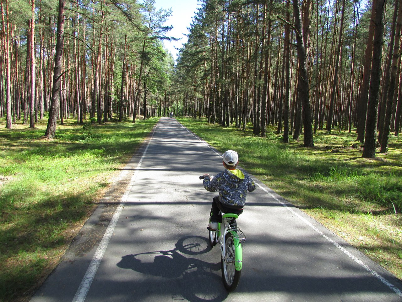 Дорога по Беловежской пуще