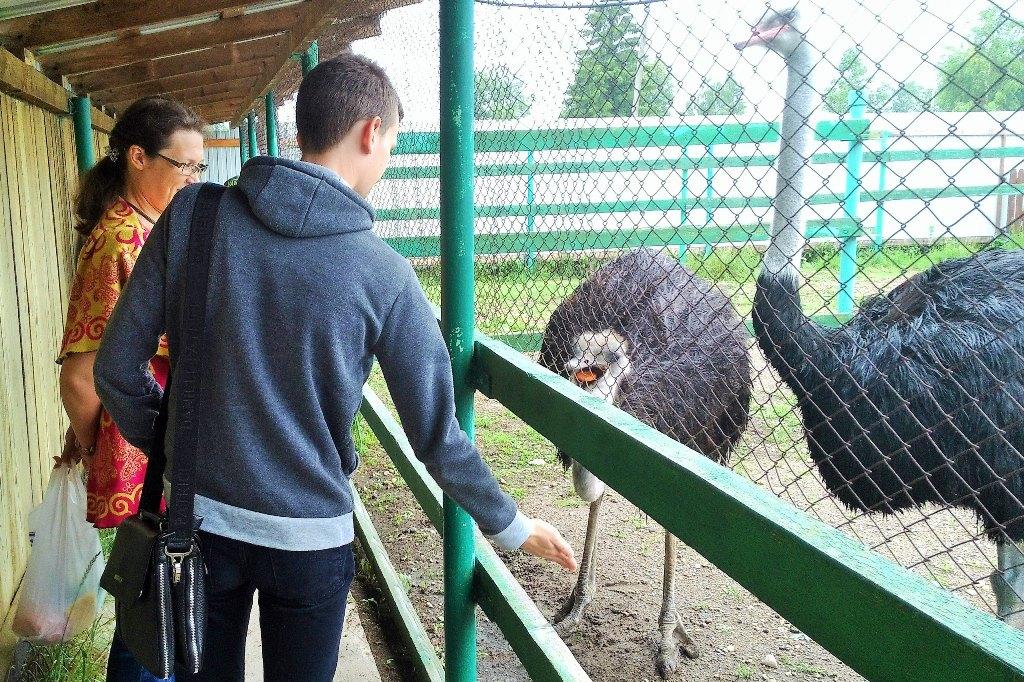 Поездка на страусиную ферму в с.Усть-Качка Пермского края