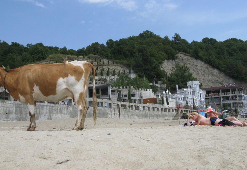 На абхазском пляже бывает и такое