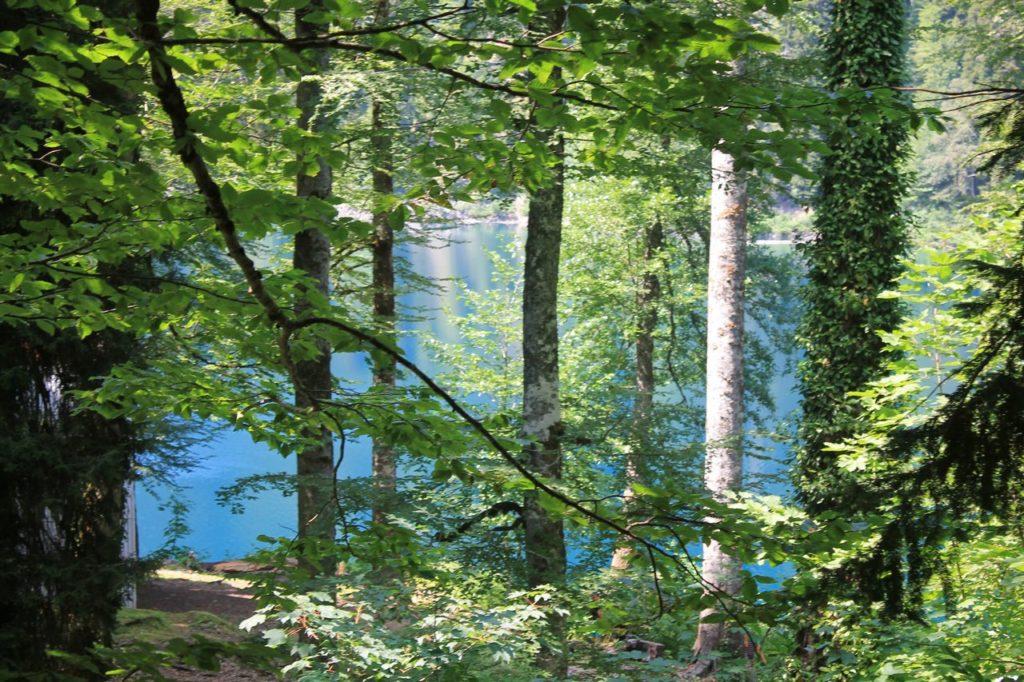 За деревьями показалась водная гладь озера
