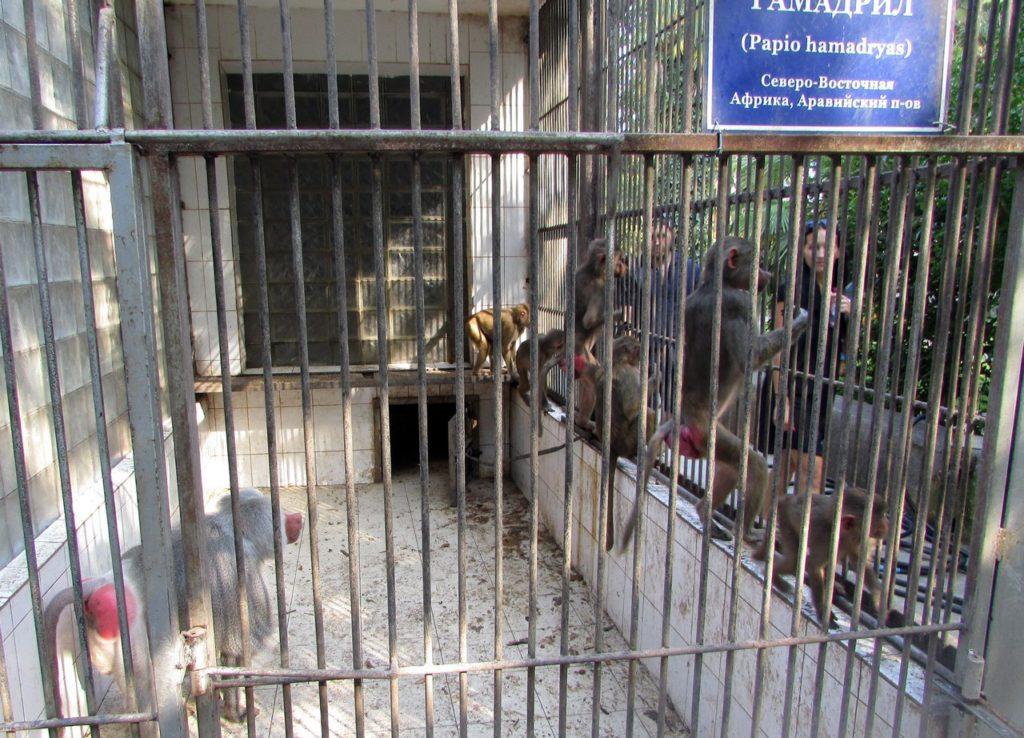 В обезьяньем питомнике