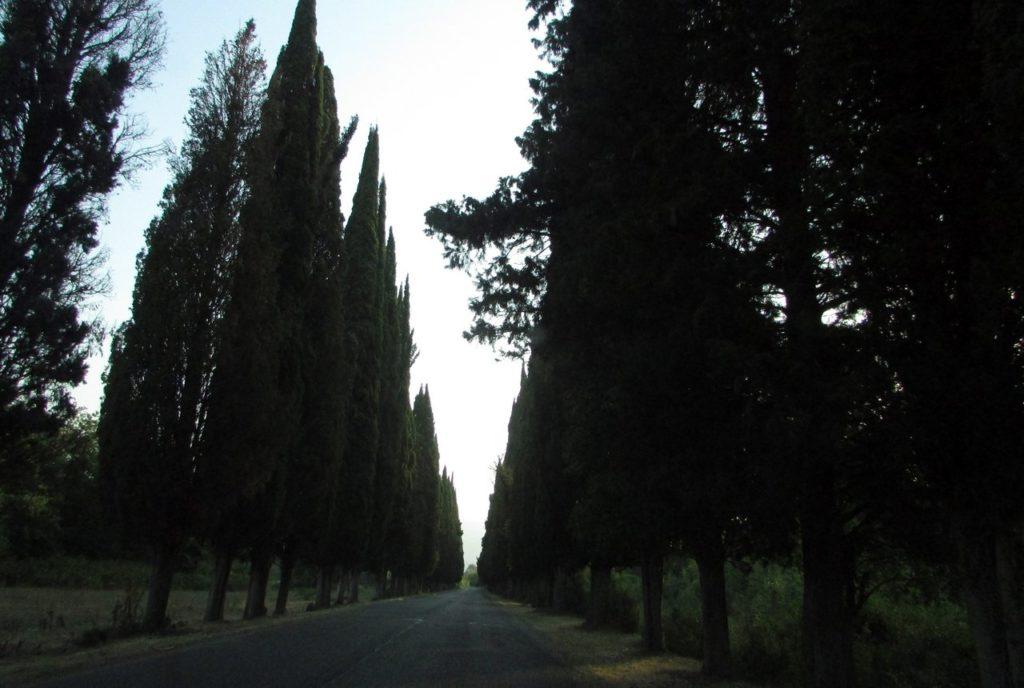 Дорога через аллею