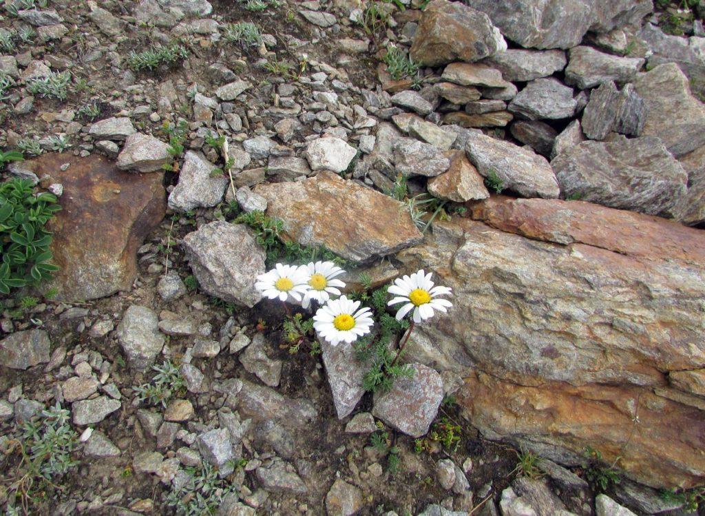В августе в горах все цветет