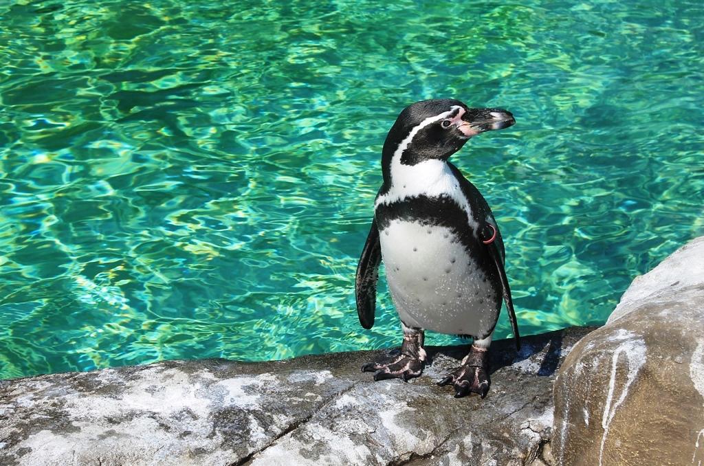 Зоопарк города Новосибирска